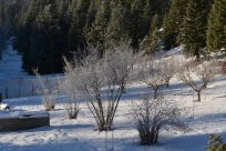 Frost hides the hidden life beneath