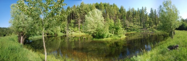 Island pond where the willows grow wild.
