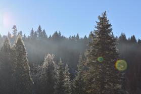 Sparkly Warkley trees