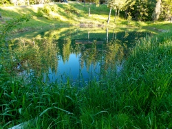 The serenity of one of our ponds in spring.