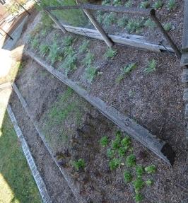 Our terraced garden.
