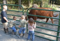 Kids can safely view our cattle and even feed them from across the gate.