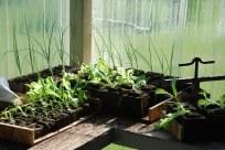 Our nursery growing good things.