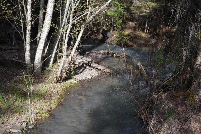 A walk along my creek (1)