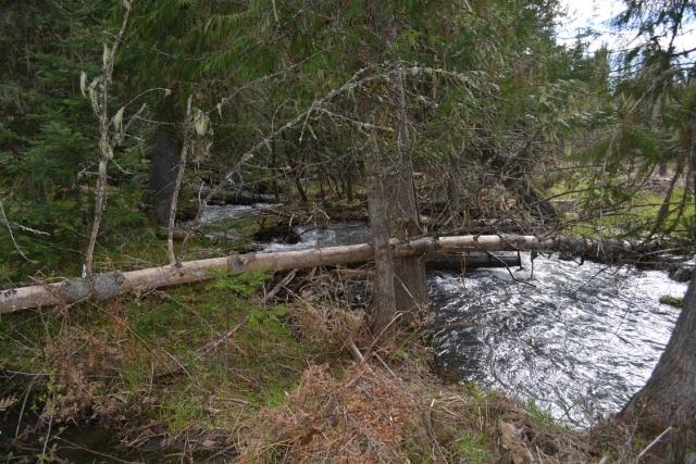A walk along my creek (10)