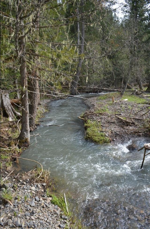 a-walk-along-my-creek-11.jpg