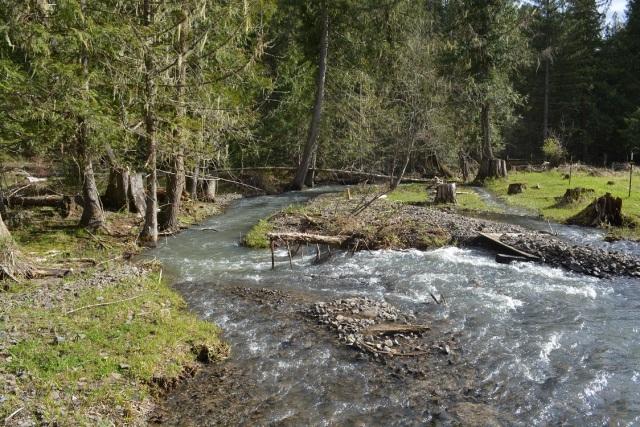 A walk along my creek (12)
