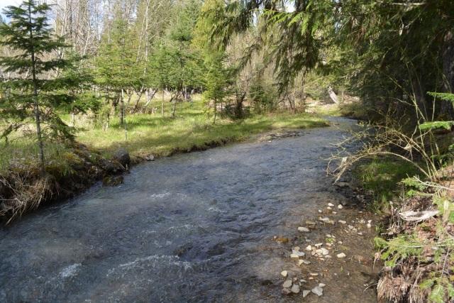 A walk along my creek (14)