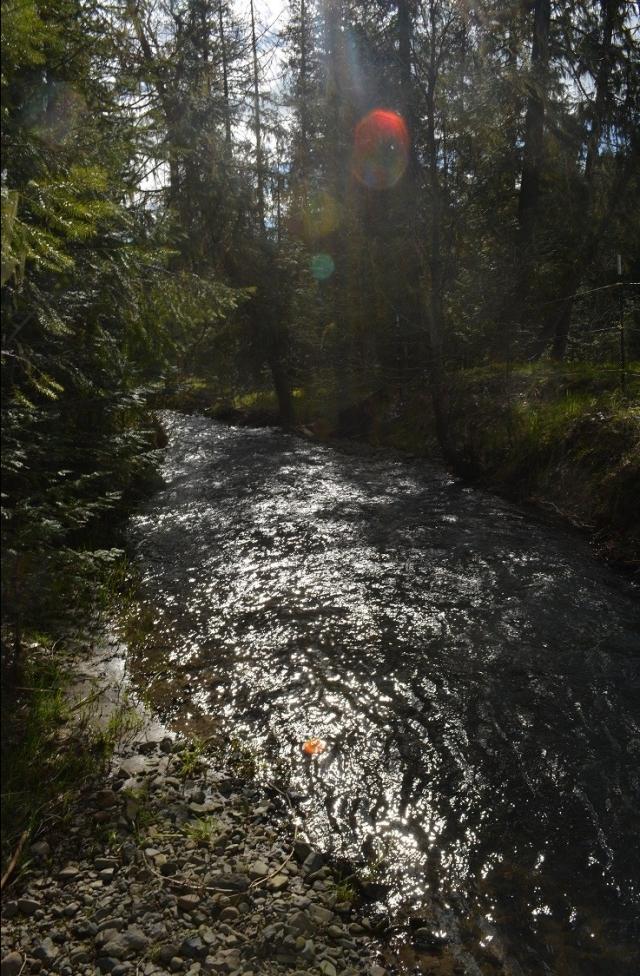 a-walk-along-my-creek-15.jpg