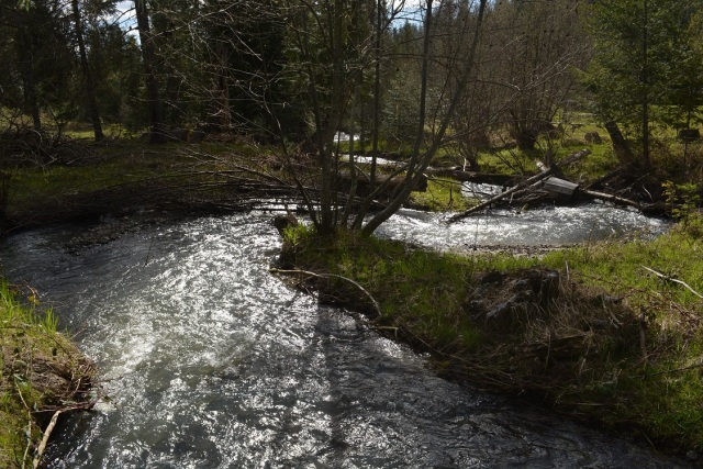 A walk along my creek (19)