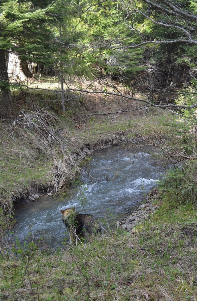 A walk along my creek (2)