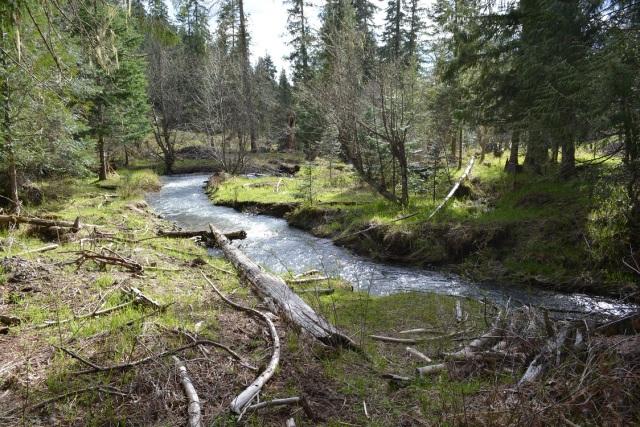 A walk along my creek (20)
