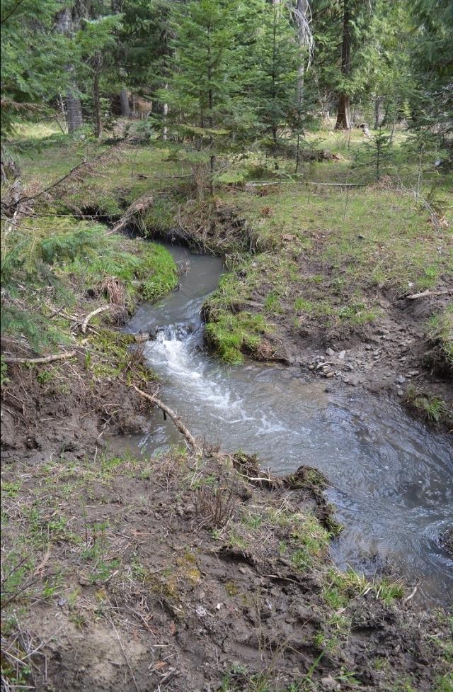 a-walk-along-my-creek-21.jpg