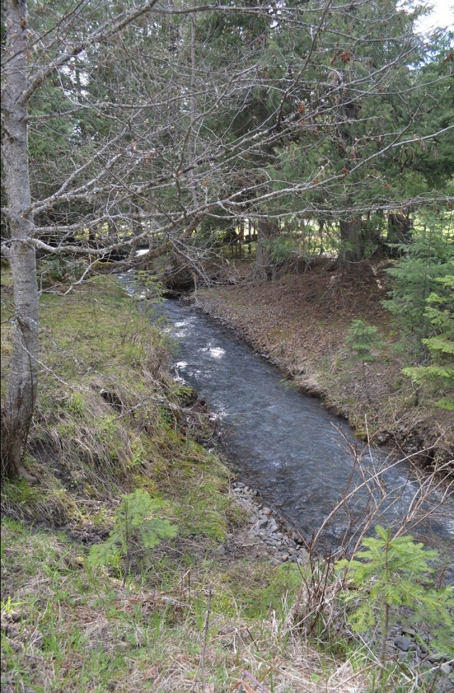 a-walk-along-my-creek-24.jpg