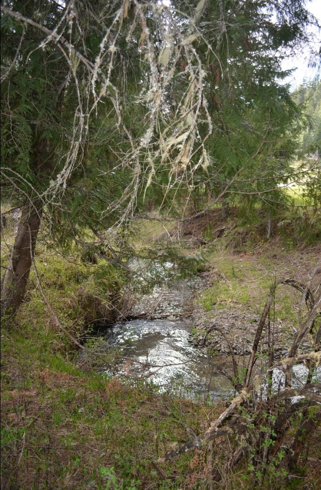 A walk along my creek (25)