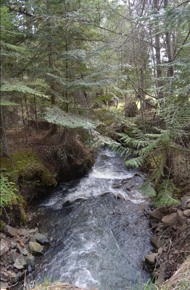 a-walk-along-my-creek-26.jpg