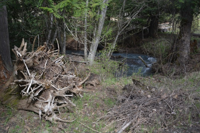 A walk along my creek (27)