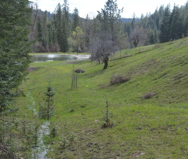 A walk along my creek (29)