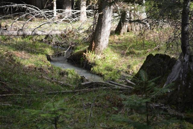A walk along my creek (3)