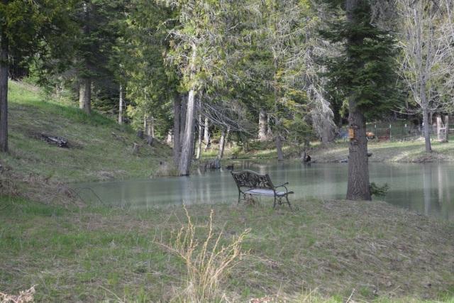 A walk along my creek (32)