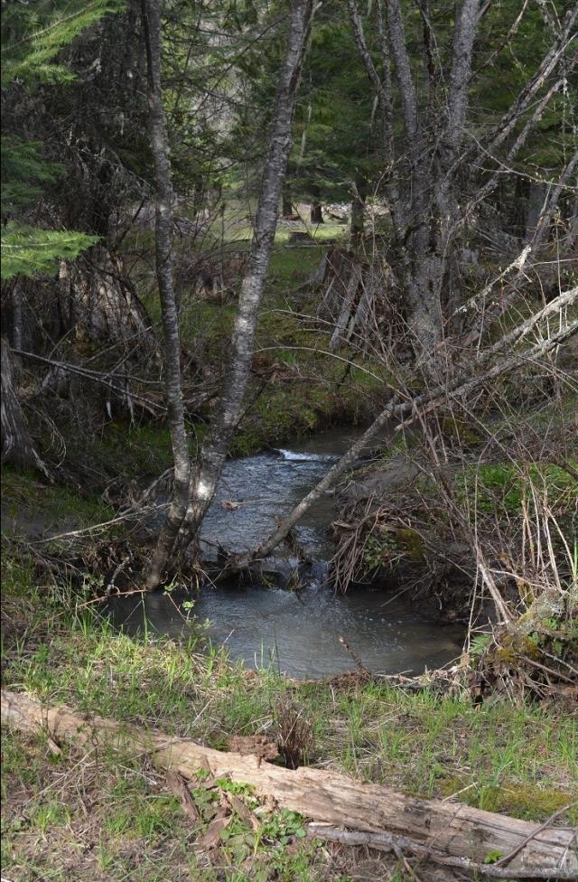 a-walk-along-my-creek-4.jpg