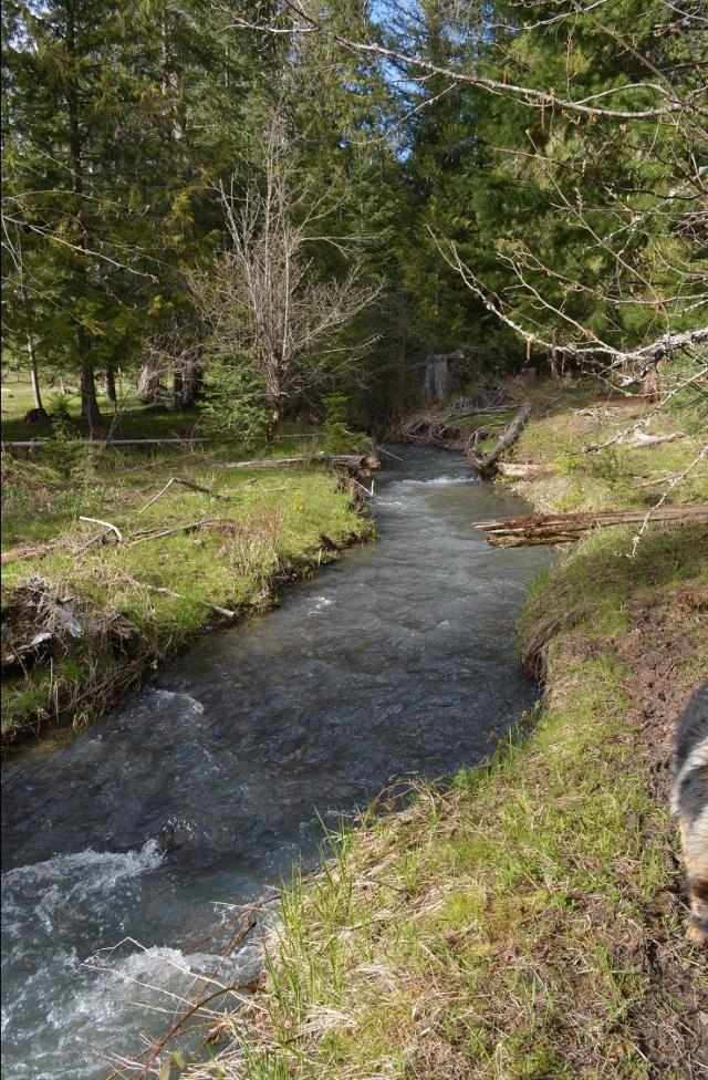 a-walk-along-my-creek-5.jpg