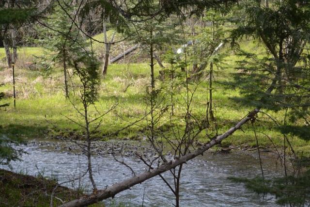 A walk along my creek (6)