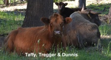 Taffy, Dunnis and Tregger family