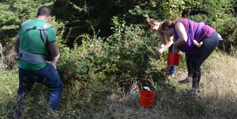 Jonathan - Maria - Becky - Molly - Ansel picking berries at the Ranch