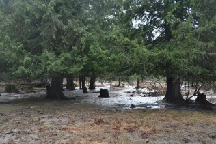 Stump meadows is flooded. The creek started a diverted run right through it.